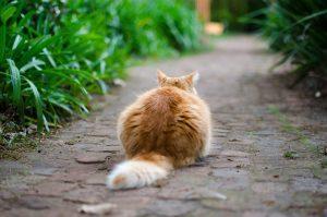 cat-691532_1280