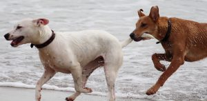 dogs-708354_1920