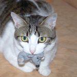 cats-1033654_1280